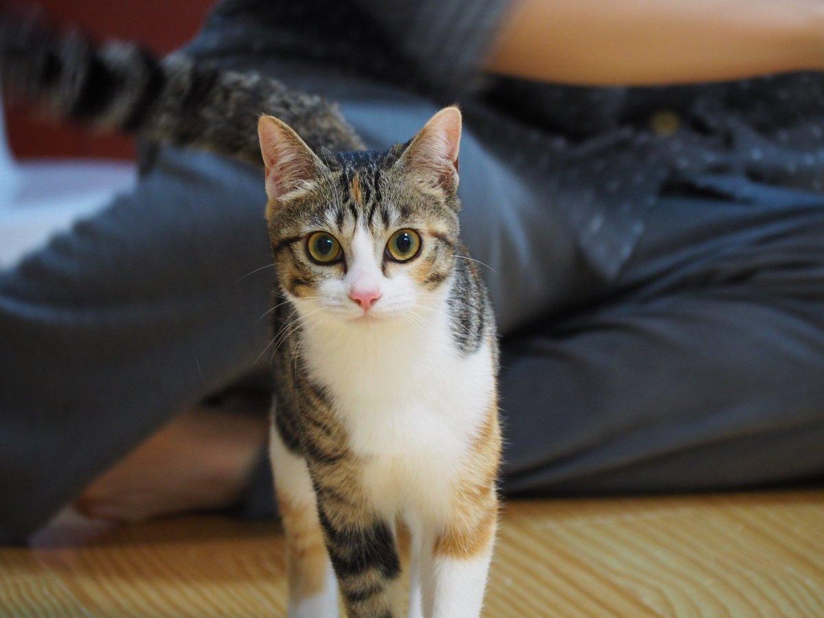 わいのネコこんなに成長したんだけど美人すぎない???