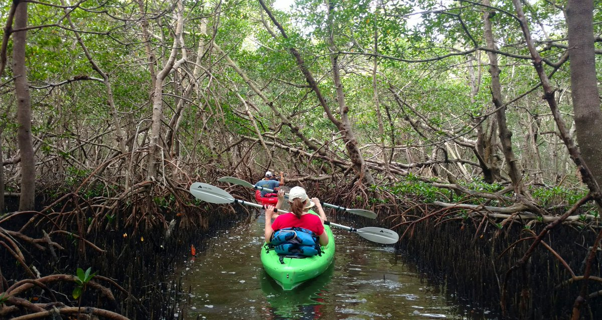 Island Kayak Tours