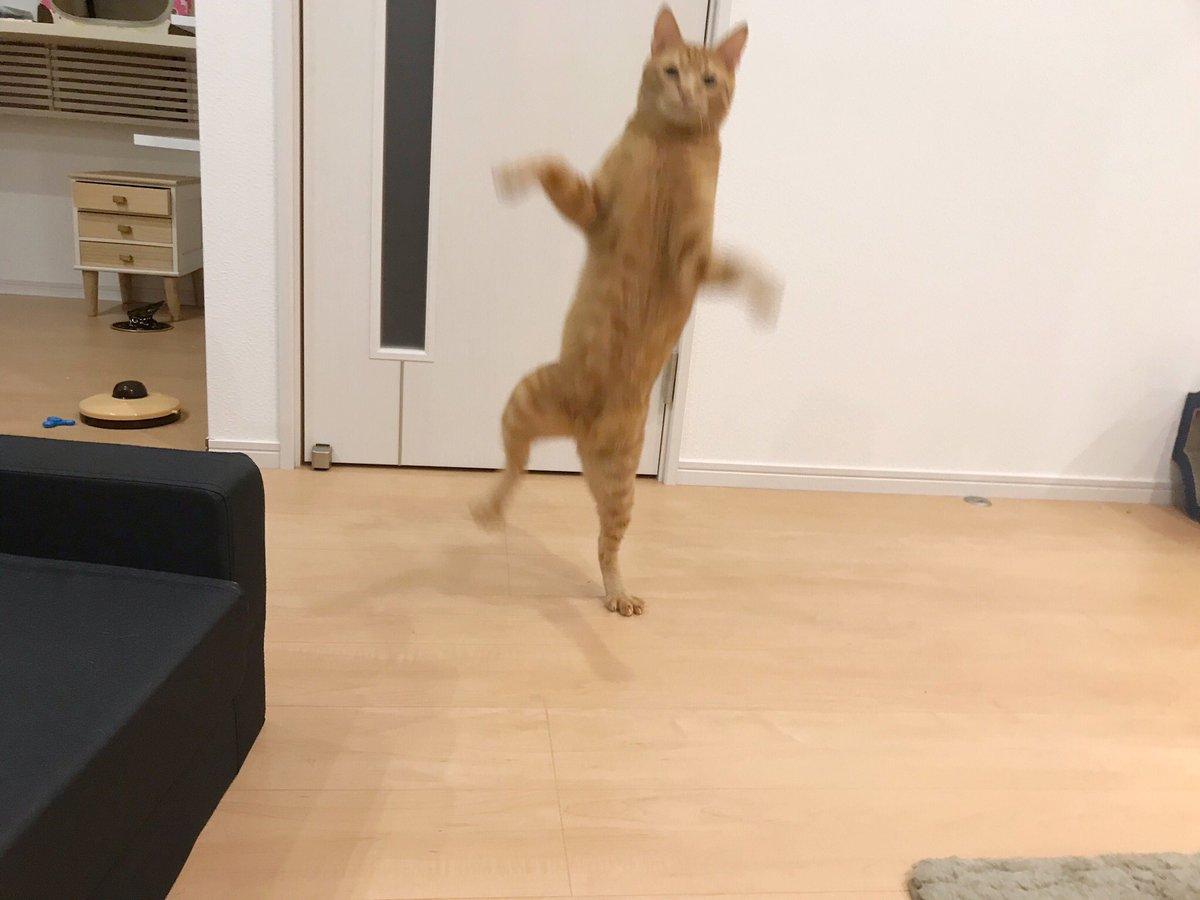 イタズラしてた猫を叱った後、一息ついてゴロゴロしてたら、こっそり足の指を噛んで走り去っていきました。仲直りを試みても、逃げていきます。下僕はこれから、おキャット様のご機嫌をとろうと思います。。