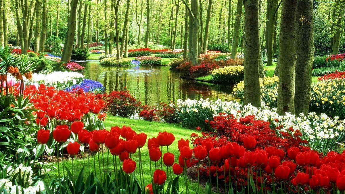 Beautiful Flowers in the wood #Flowers #Gardens #Traveling #travel #Photography #Photo #500pxrtg #USA #rt #love #follow #IFB #Nature #Share #landscape #pictures #hiking #camping #ThursdayMotivation #ThursdayThoughts #ThursdayAesthetic