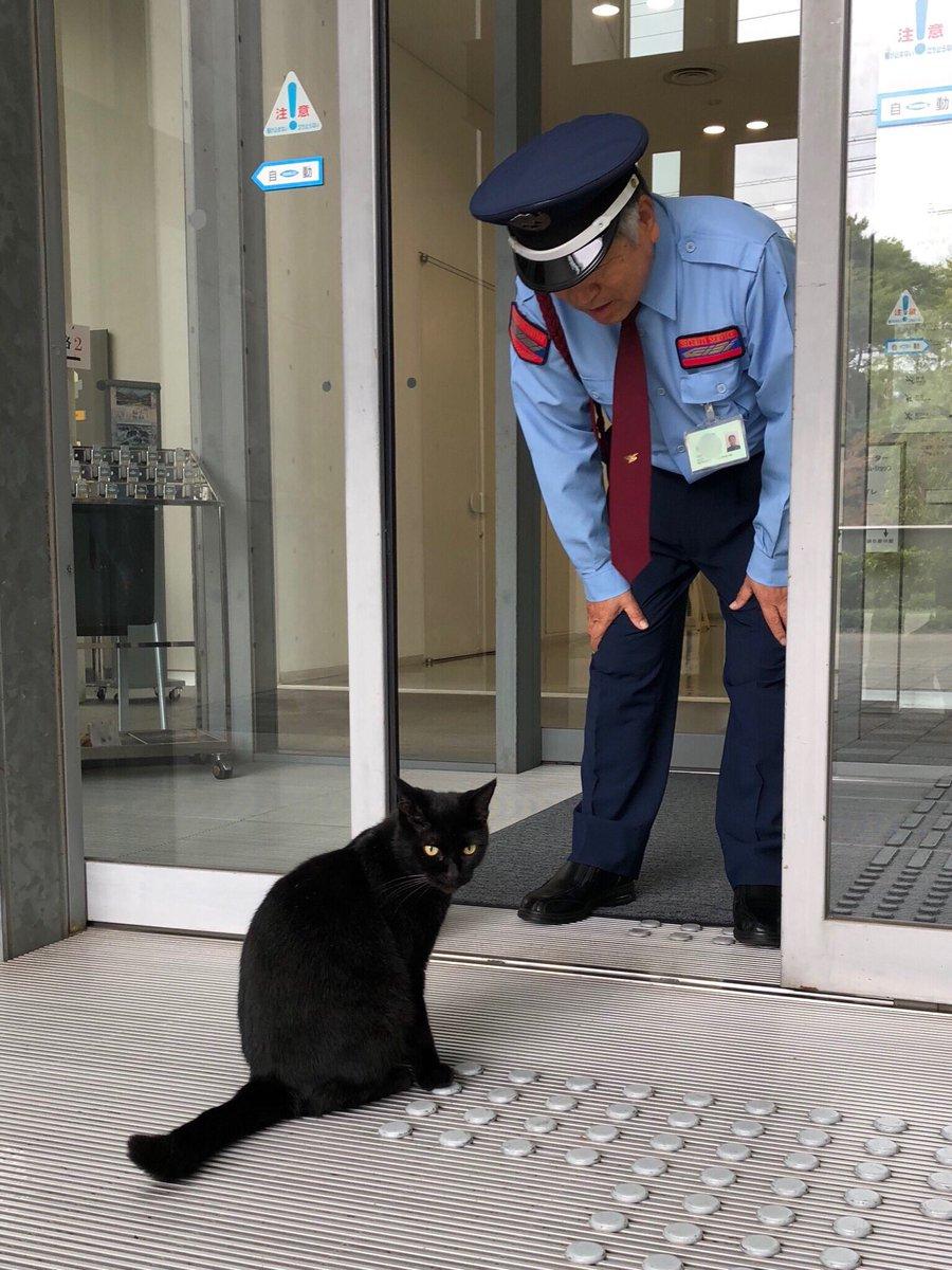 Giremedikleri müzenin müdavimleri: Japonya'da 2 kedi, 2 yıldır müzeye girmeye çalışıyor sptnkne.ws/karX
