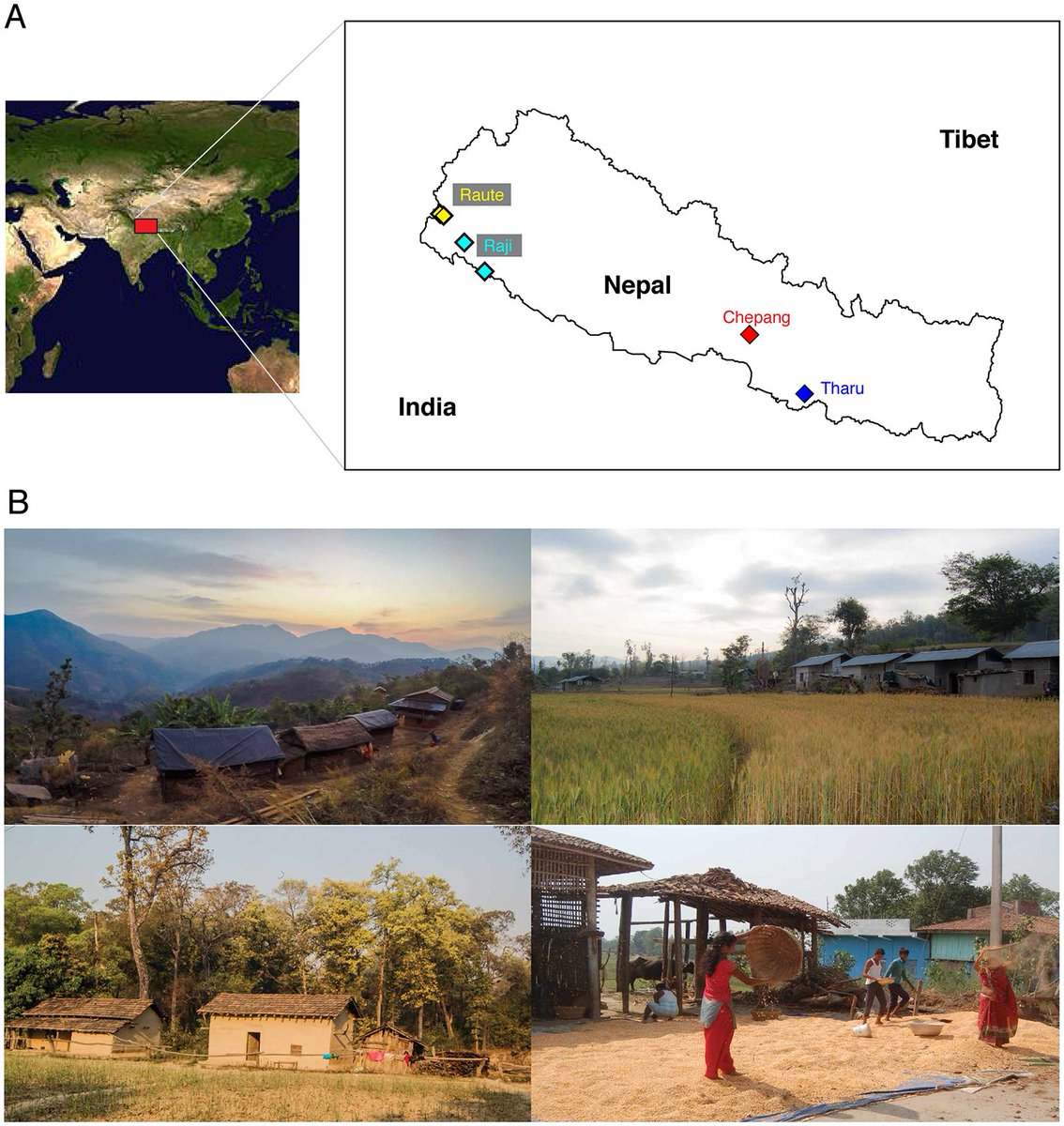 Our paper on gut microbiome transition across a lifestyle gradient in Himalaya is out today in @PLOSBiology. It was great working with @emo_davenport @yos_h @MeDinesh43 @sar1234tan @GabiFragiadakis @SherlockpHolmes @cdbustamante @GutBugs2. https://bit.ly/2zTh6Yo