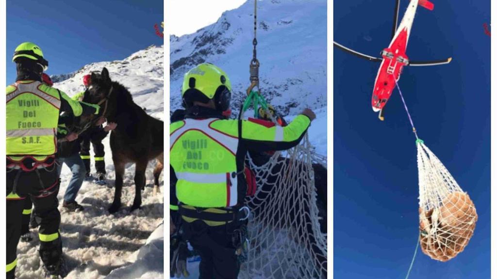 Sondrio, nevicata blocca mandria di cavalli: salva...
