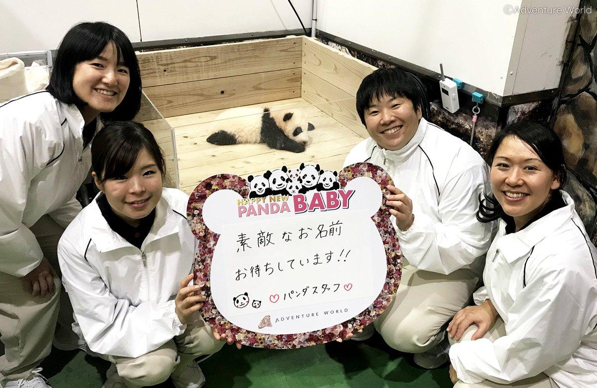 パンダ 名前 ワールド アドベンチャー ジャイアントパンダの赤ちゃんの名前募集に9万通を超えるご応募ありがとうございました「パンダの赤ちゃん名前投票」で名前を決定いたします 投票期間:2021年3月4日㈭~11日㈭|アドベンチャーワールドのプレスリリース