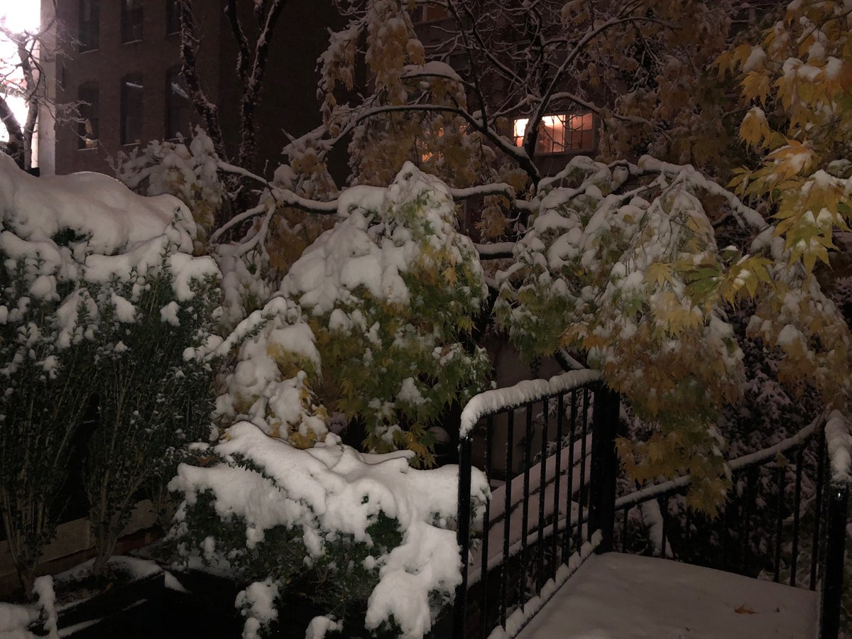 The first #snowfall of the season #NYC @MorningsMaria @FoxBusiness see you bright & early 6-9am et tomorrow