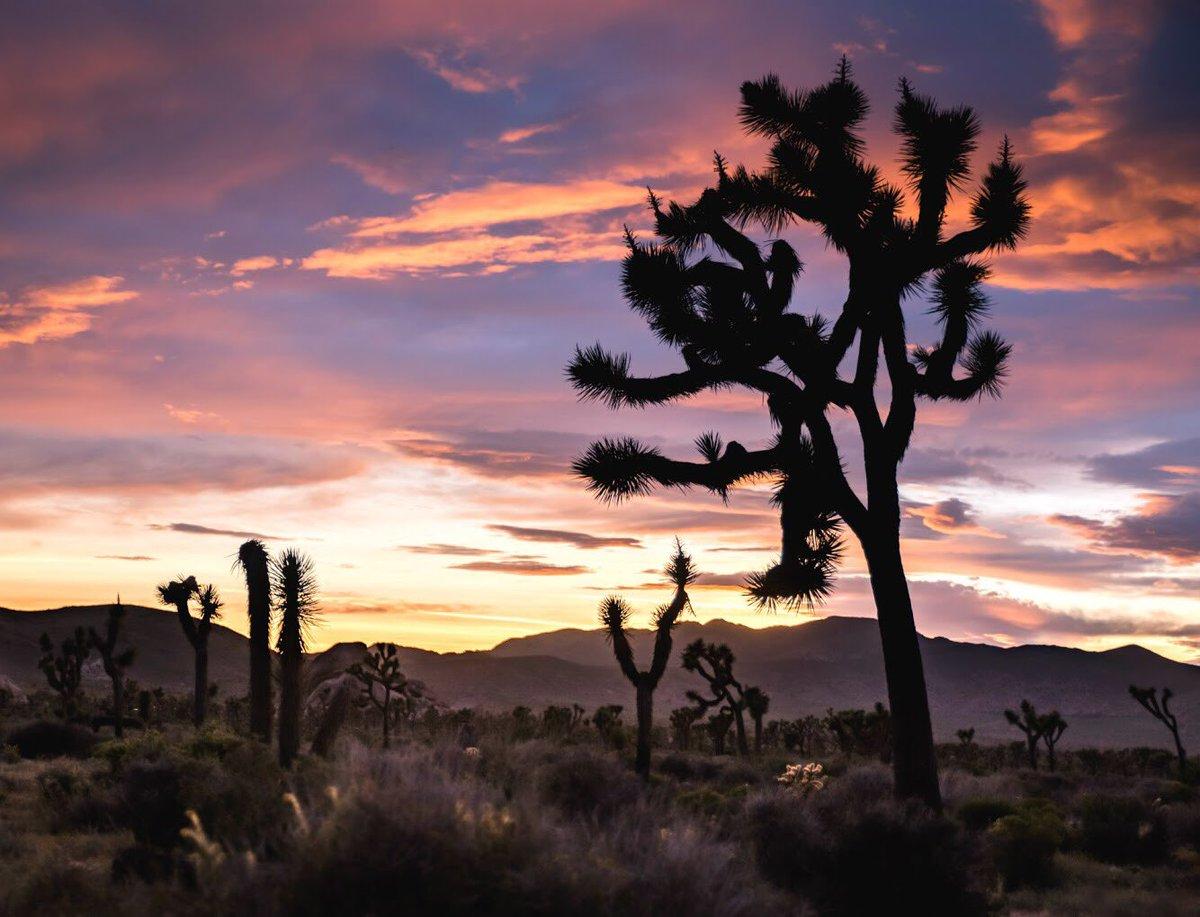 Pastel sunset over the desert @JoshuaTreeNPS by Will Strathmann #California https://t.co/B3N3d5NM70