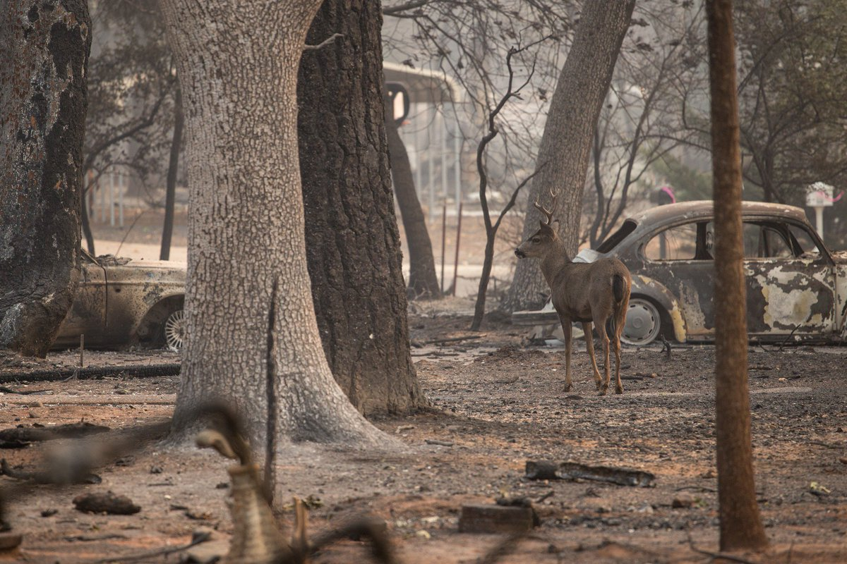 The number of missing people caught up in the devastating Californian wildfires has jumped to 631 people. bit.ly/2zZClaU
