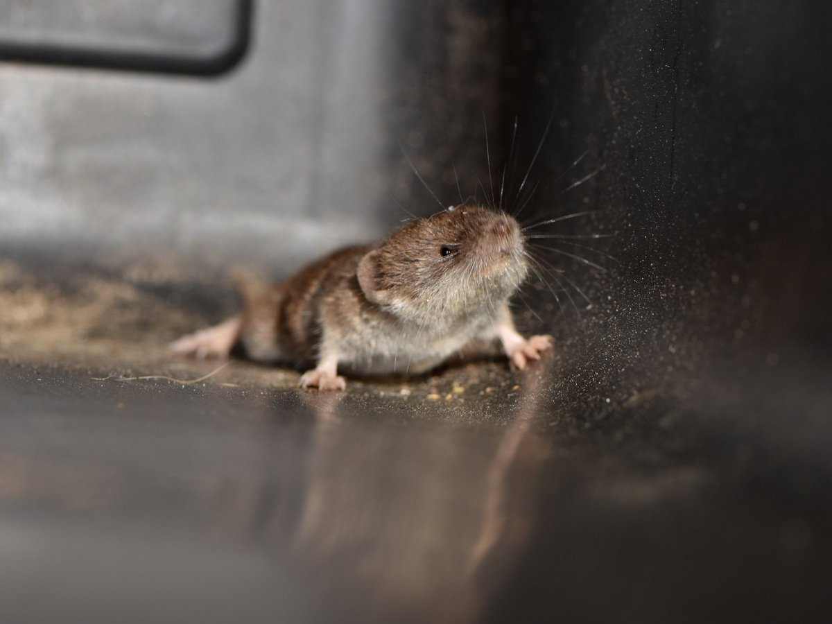 14 of the smallest animals on Earth businessinsider.in/science/14-of-…