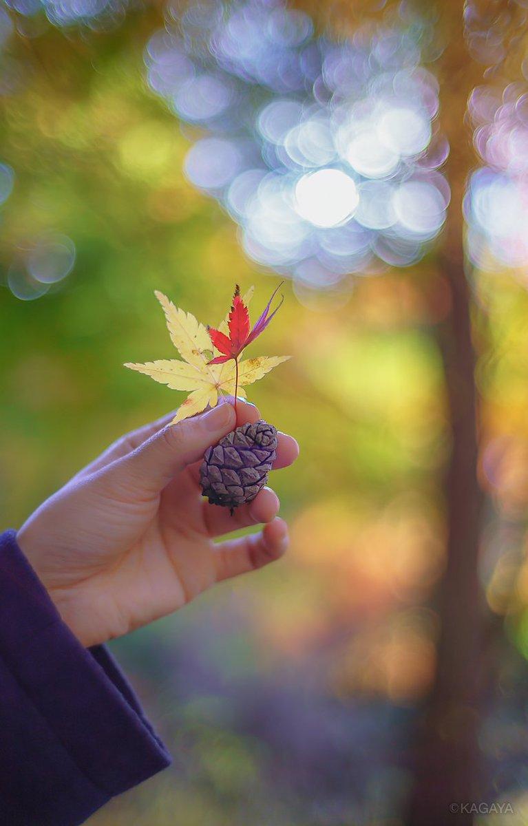 秋の待ち受けにどうぞ。