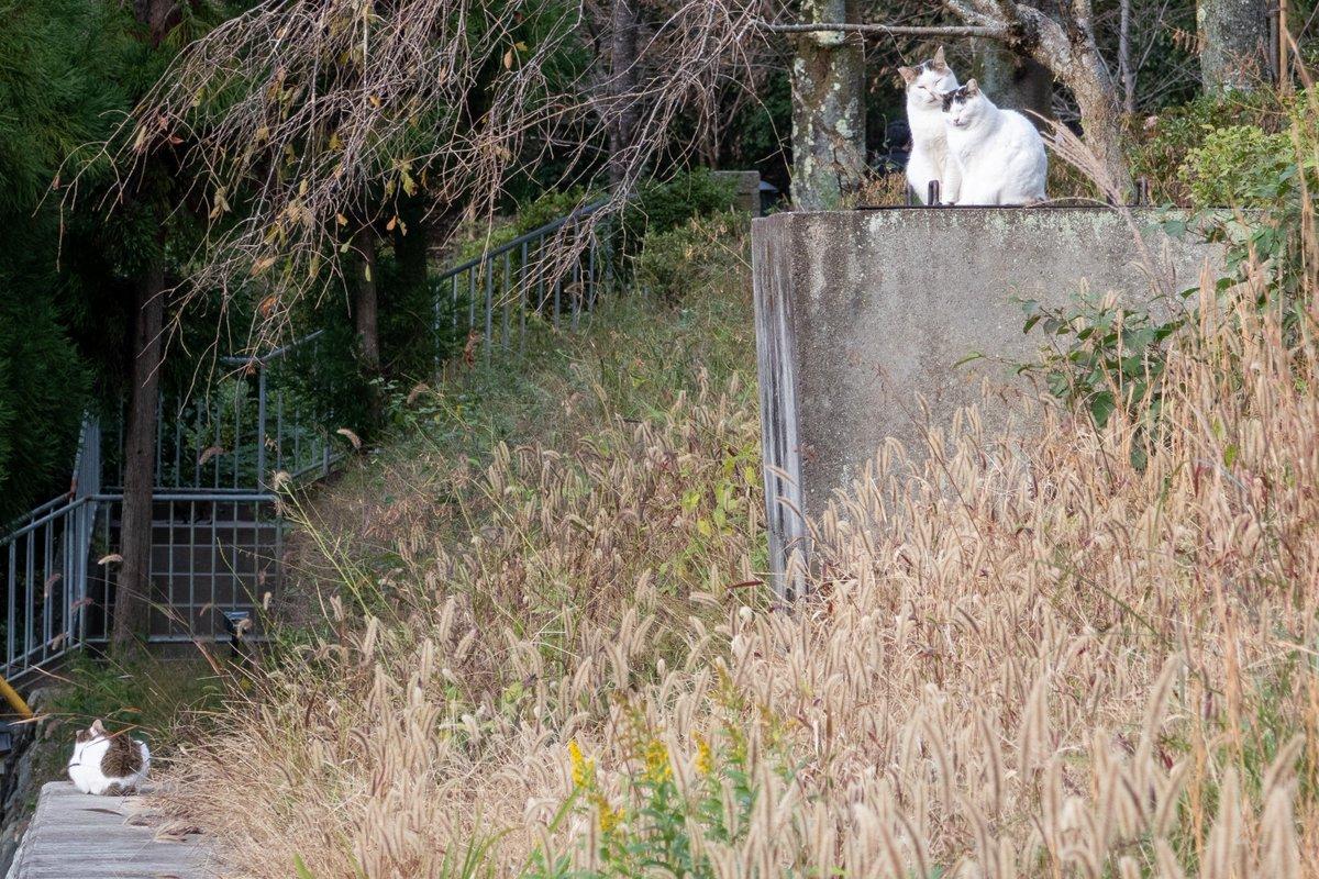 哲学の道で仲良し猫を見ました。