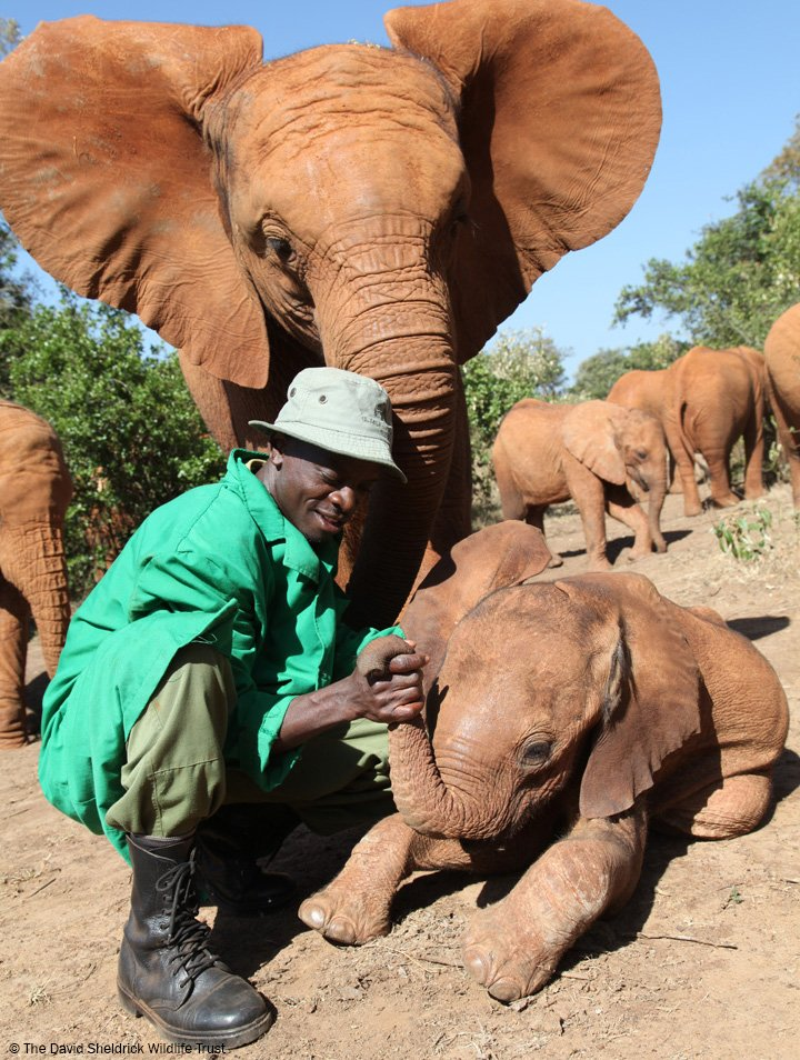 #FlashBackFriday: A little Kithaka to make you smile 😊 This picture of Kithaka - everyone's favourite trouble maker – was taken in 2012, just a few months after he was rescued. Read his story here: thedswt.org/kithaka