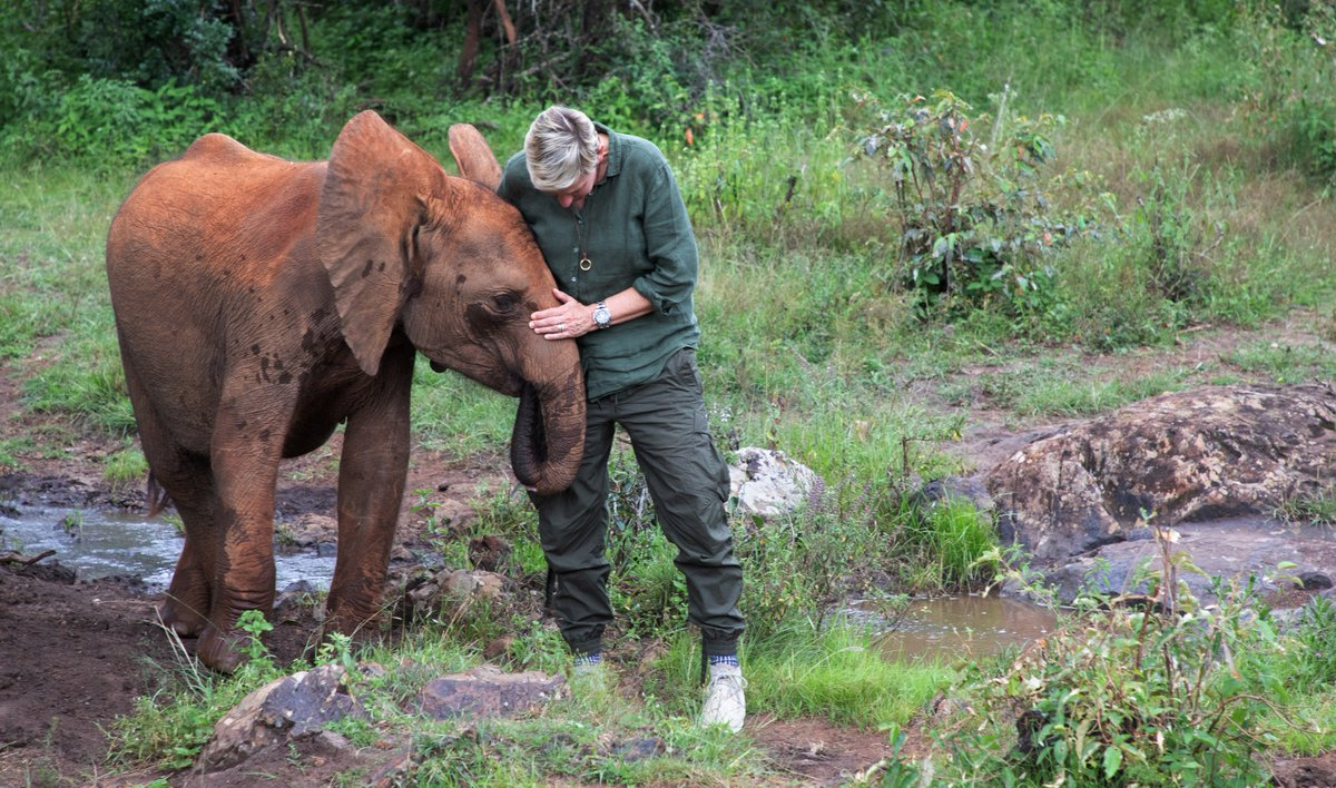 I'm grateful to every one of you who helped me support these animals. #OneYearLater #BeKindToElephants @DSWT