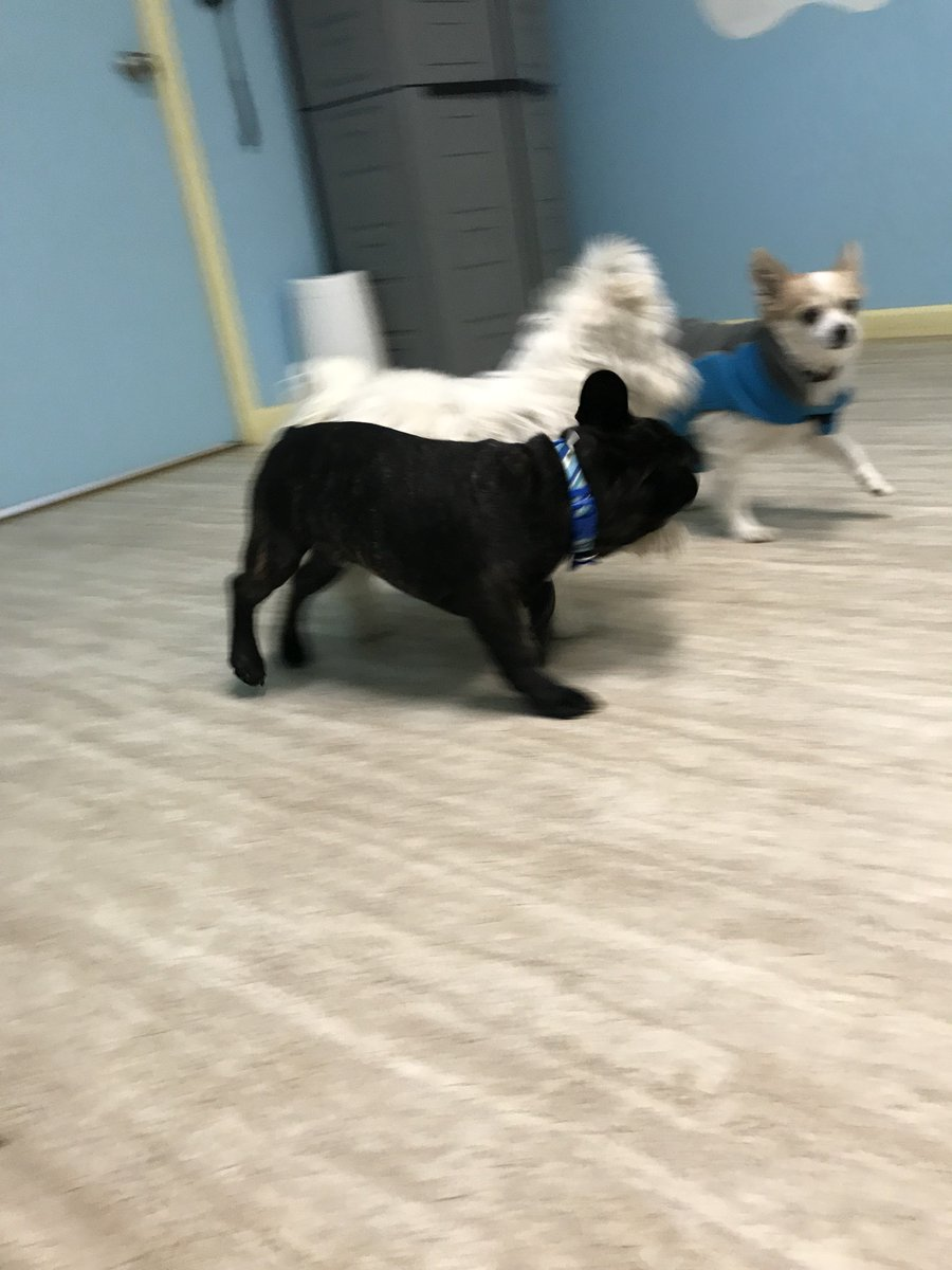 Linus, Tucker R and Gilly run around