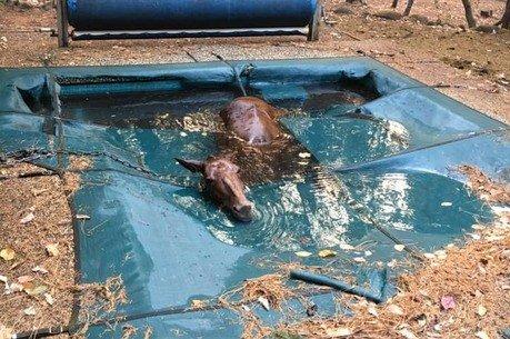 Cavalo se esconde em piscina para fugir de incêndios na Califórnia   https://t.co/KlIvI10Xyn