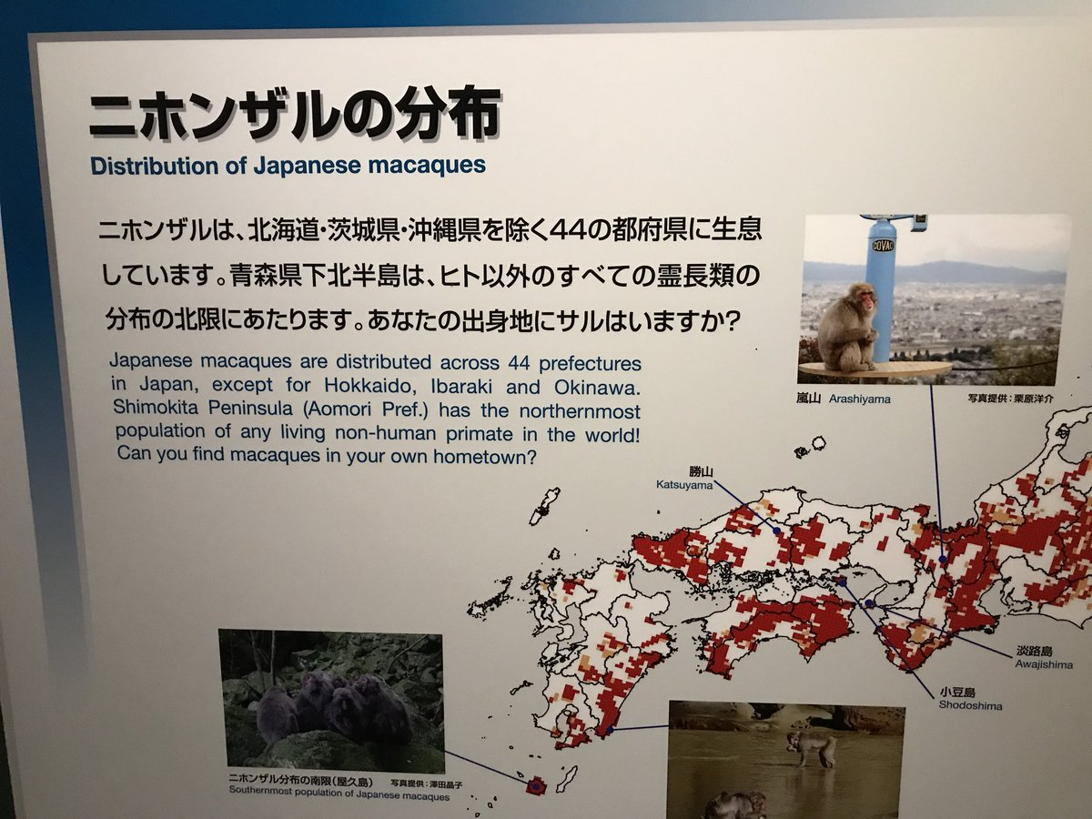 RT @Q_SA_I: 茨城県にはなぜかサルがいません https://t.co/0cKR6Cytuv