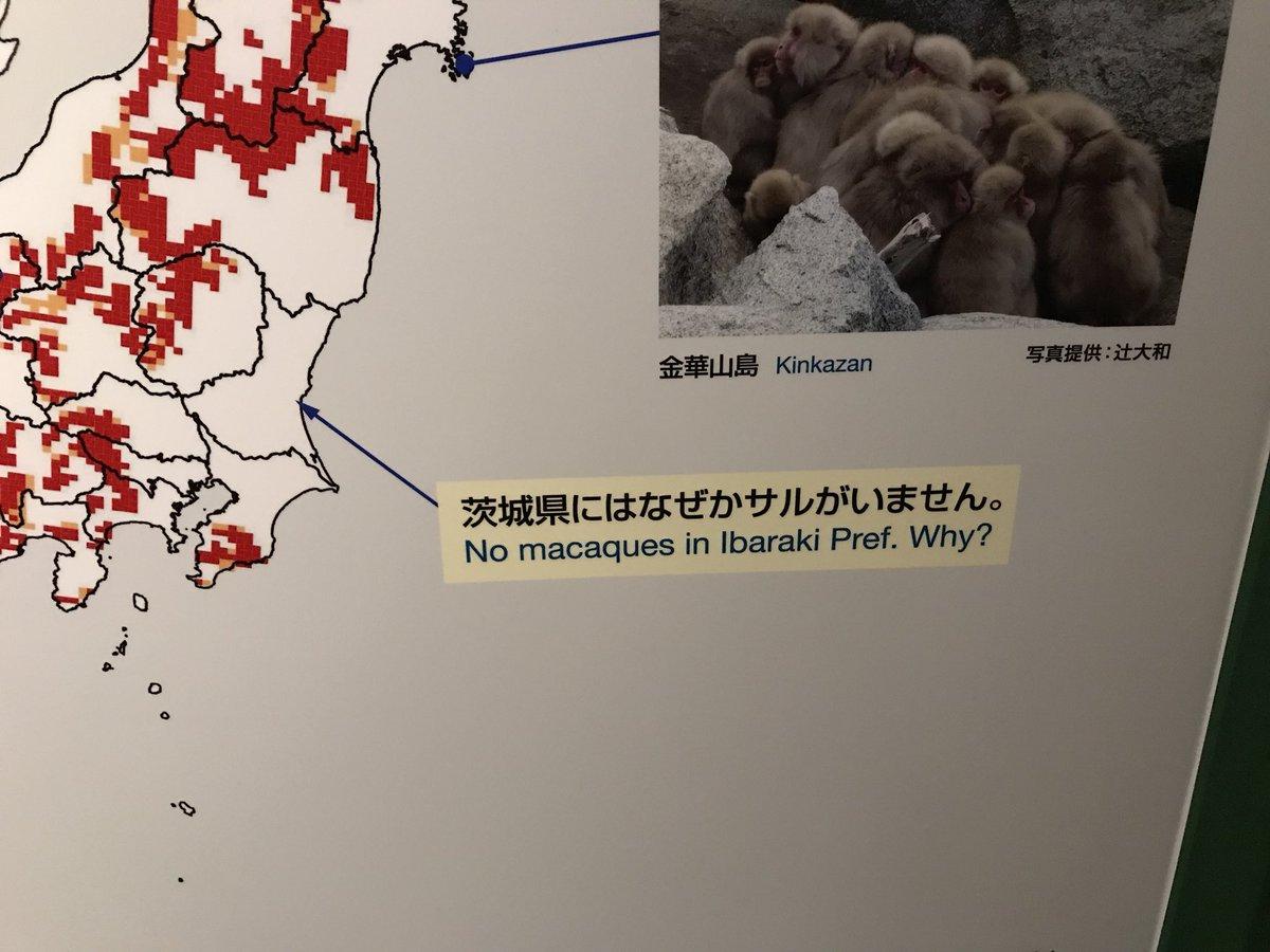 茨城県にはなぜかサルがいません
