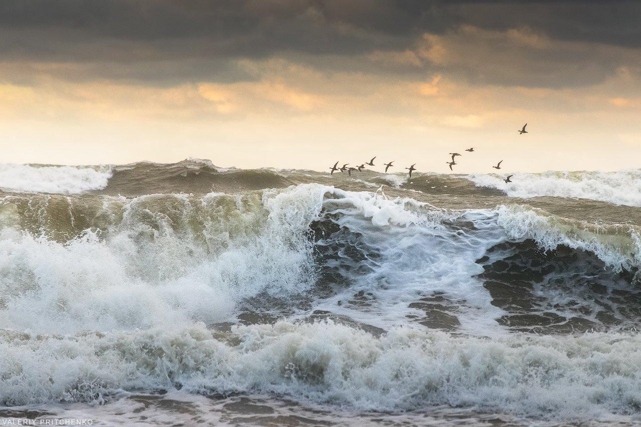 брошь подснежники штормовое море фотографии это