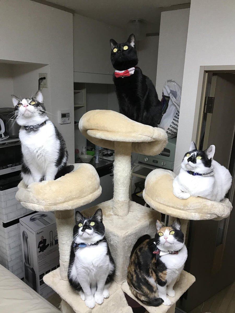 ゴキブリどもに告ぐ…我が家に出たゴキブリはこの五猫神に24時間絶命するまで見つめられるのだ…覚悟しな…