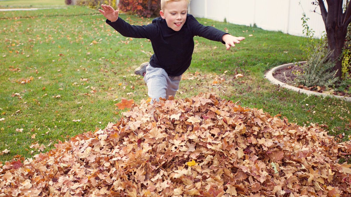 Kid Diving Into Pile Of Leaves Has No Idea There Homeless Guy Jerking Off In There trib.al/uPvFujg