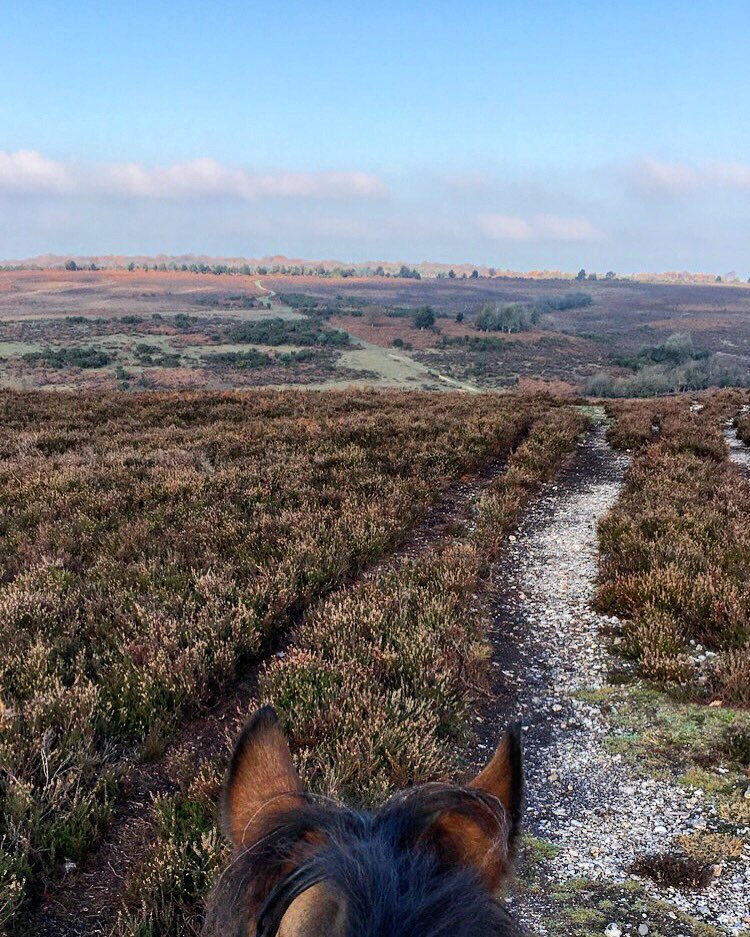 This place!!  So many colours... so beautiful!! #newforest #hacking #autumnrides #rowdownunionjack<br>http://pic.twitter.com/k65N3DoBmj