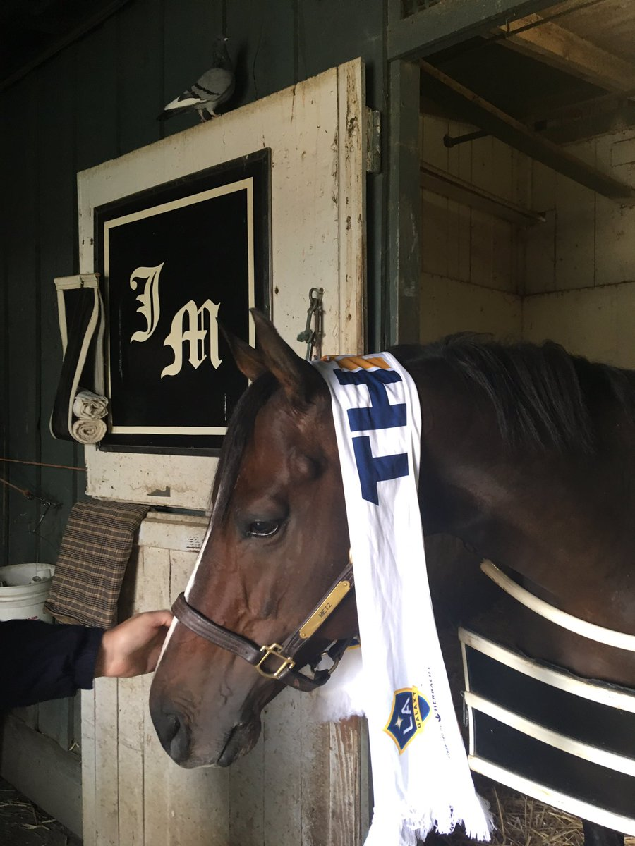 Cozmo La Galaxy On Twitter Coolest Soccer Horse In Town