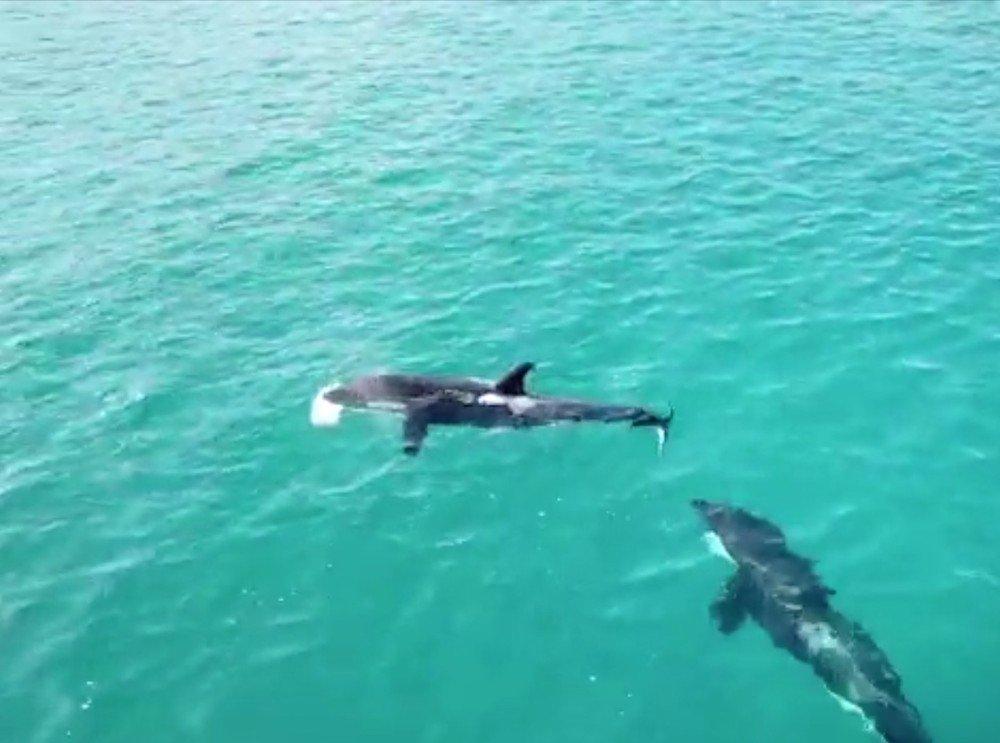 Grupo de orcas surge no mar de Arraial do Cabo, no RJ; veja imagens aéreas https://t.co/4zo0knVqKJ #G1