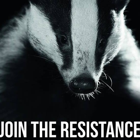 #Strictly speaking badgers are a protected species. However under the current cruel and corrupt Tory regime they are being slaughtered in their thousands to appease the @NFUtweets who believe in myths and fairytales about badgers and BTB Photo