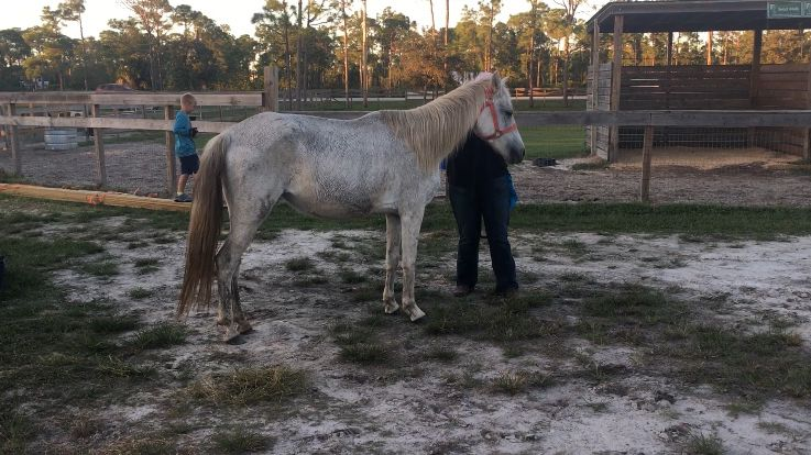 Neglected horses from north Florida sent to Treasure Coast rescue https://t.co/1zb4odr3XG