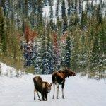 Image for the Tweet beginning: Rockies roadblock!  Photo by: ritzrox on