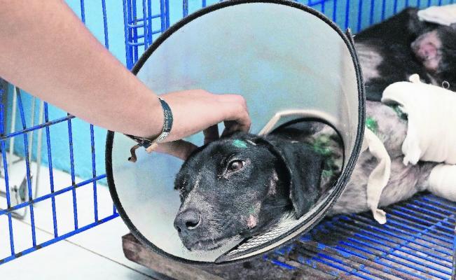 Proponen iniciativa para castigar el maltrato animal con hasta cinco  años de prisión https://t.co/6nTgHvnhYo
