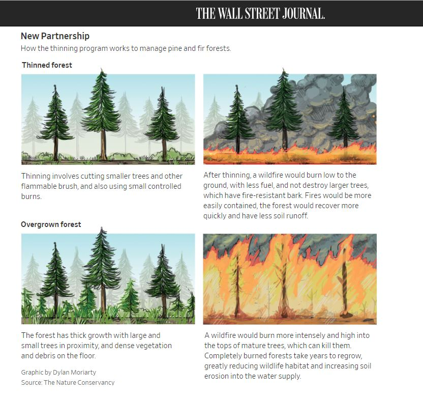 fe86f39dbd8 ... there s a must-read article in the WSJ today. Properly managed forests  survive fires