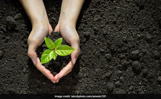 Noida plants 1.7 lakh saplings in a day, betters own record https://t.co/SECfXnmq4C