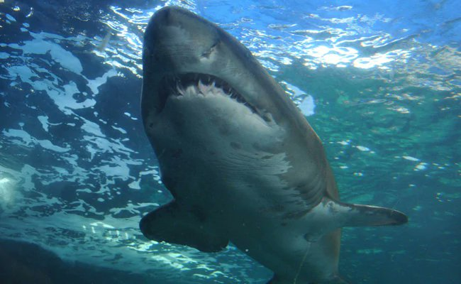 Surfer trainee attacked by shark in Australia, sixth incident in 2 months https://t.co/8U4YPrwPGz