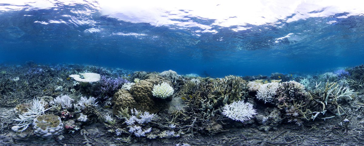Coral reefs provide protection from extreme weather, food, livelihoods & economic opportunity to more than 1/2 a billion people. These crucial ecosystems are being destroyed at an alarming rate:    📷https://t.co/jjZ51cctPaT#climatechangehe Ocean Agency/XL Catlin Seaview Survey