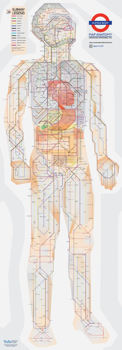 Doctor @jcsimmo has created this beautiful chart of the human body in the style of the London Underground map.