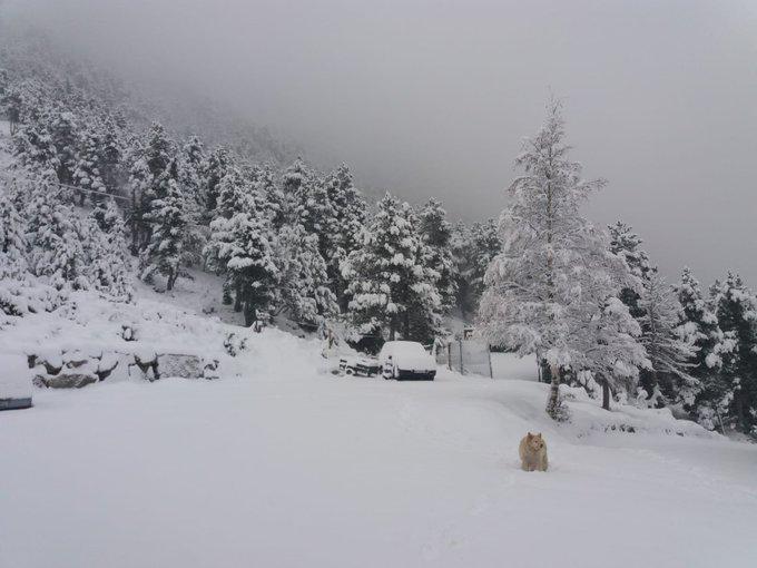 Així es desperta #Vallter2000!😍🌨️ Amb aquesta nova gran nevada, comença el compte enrrere per iniciar una nova temporada!⛷️❄️ Cada cop falta menys!👏