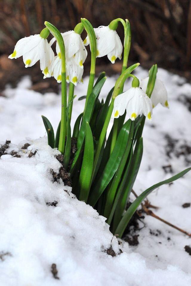 Фото первые цветы весны