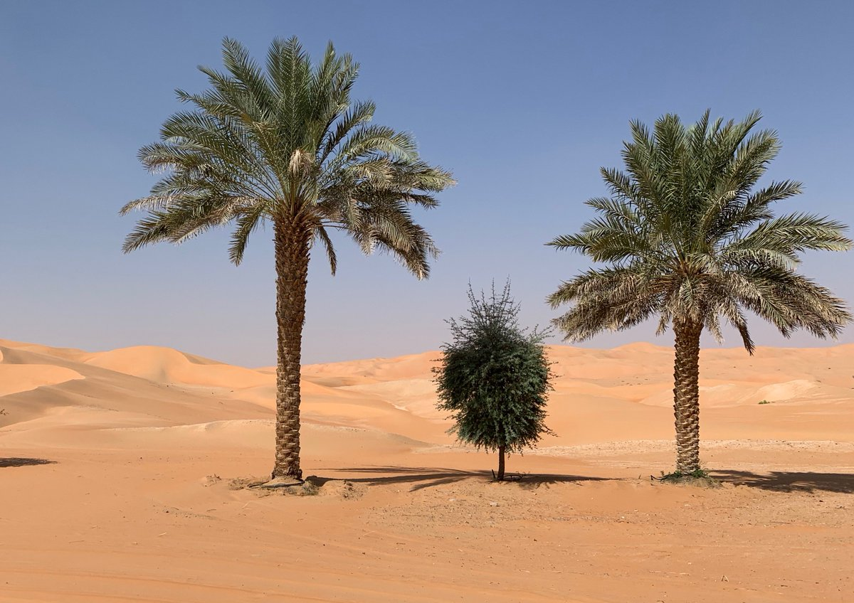 Near the Liwa Oasis area in UAE.  Rub al Khali desert. World's largest sand desert. Amazing nature.