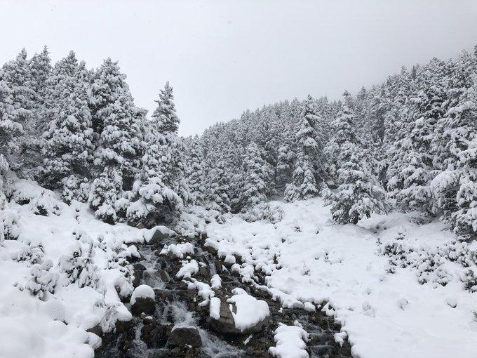 Importante nevada en @Vallter2000 seguimos acumulando cm, nieve a partir de @AjSetcases, ya queda menos. @escolavallter @muntanyaimeteo @ajcamprodon @valldecamprodon @diaridelaneu @costabrava @pirineugirona @alexmegapc