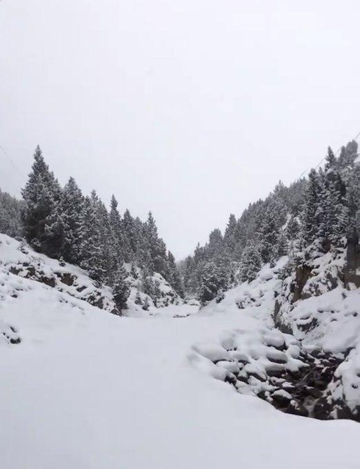 ❄️  Vuelve a nevar  ❄️