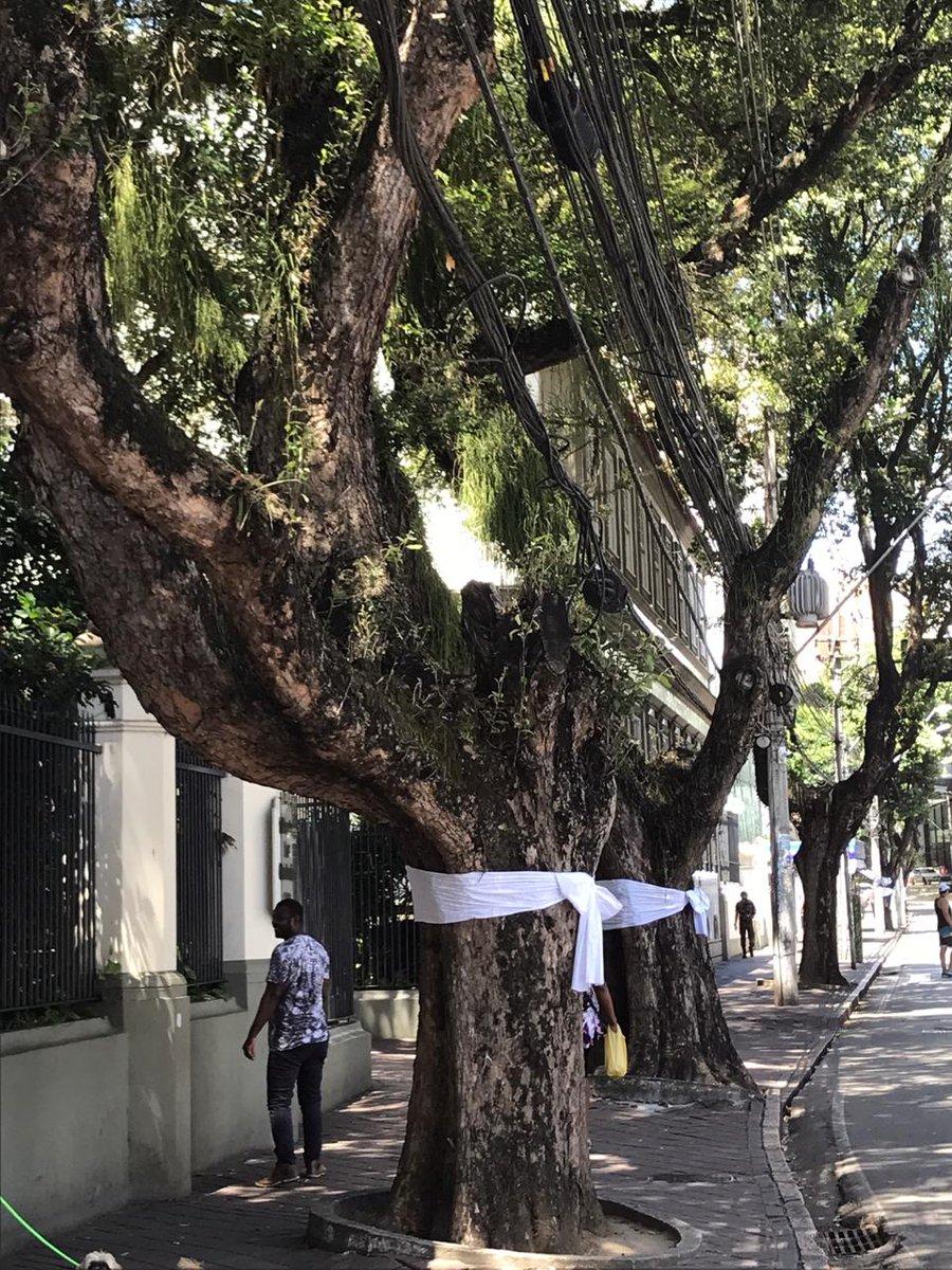 árvores de salvador vestidas de branco para lembrar o assassinato de mestre moa do catendê por um seguidor do presidente de extrema-direita