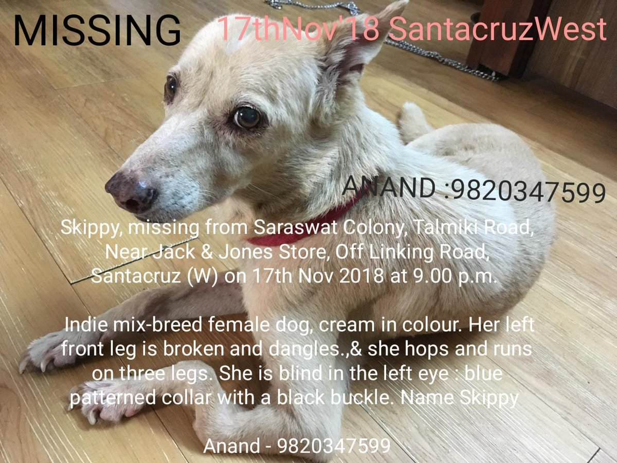 #Dog #Missing #SantaCruzWest #Mumbai   HELP - Twitter ... https://t.co/8Oe01PDA6Q