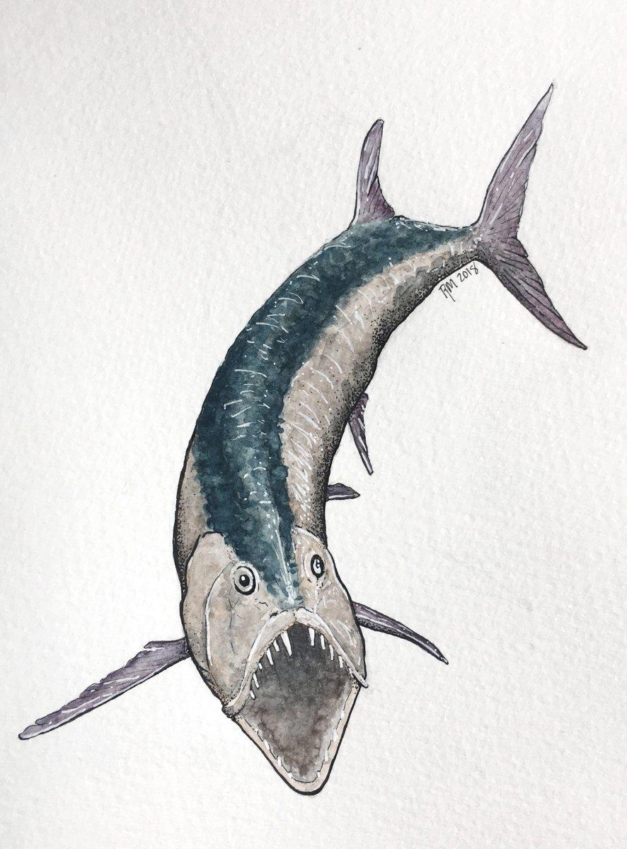 xiphactinus fish - 736×996