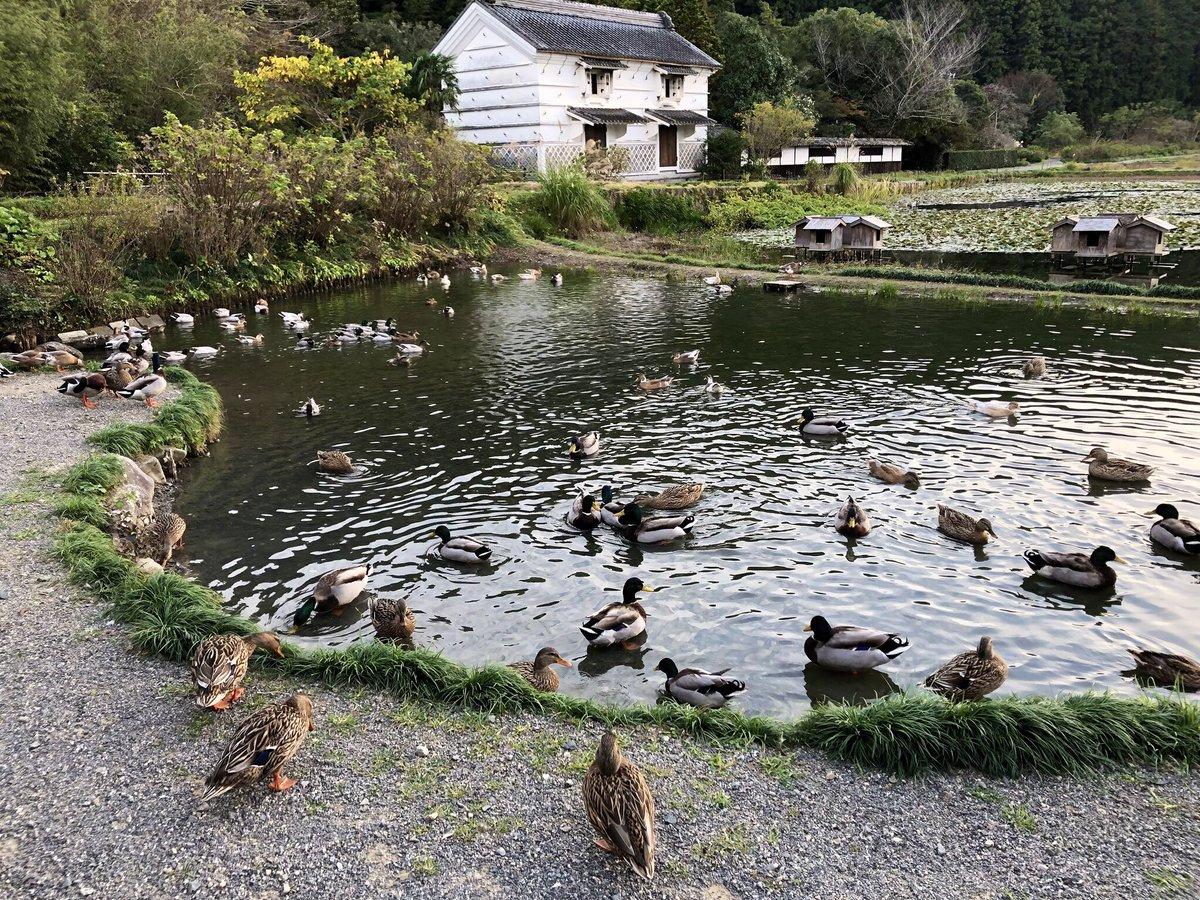 @nX1RoJYR61iYdUr はい!私も加茂荘花鳥園の方が良かったです?ブリトニーさんもすっごく気に入らはると思いますよ✨1.2枚目が加茂荘花鳥園の屋外、3.4枚目が掛川花鳥園の屋外です?