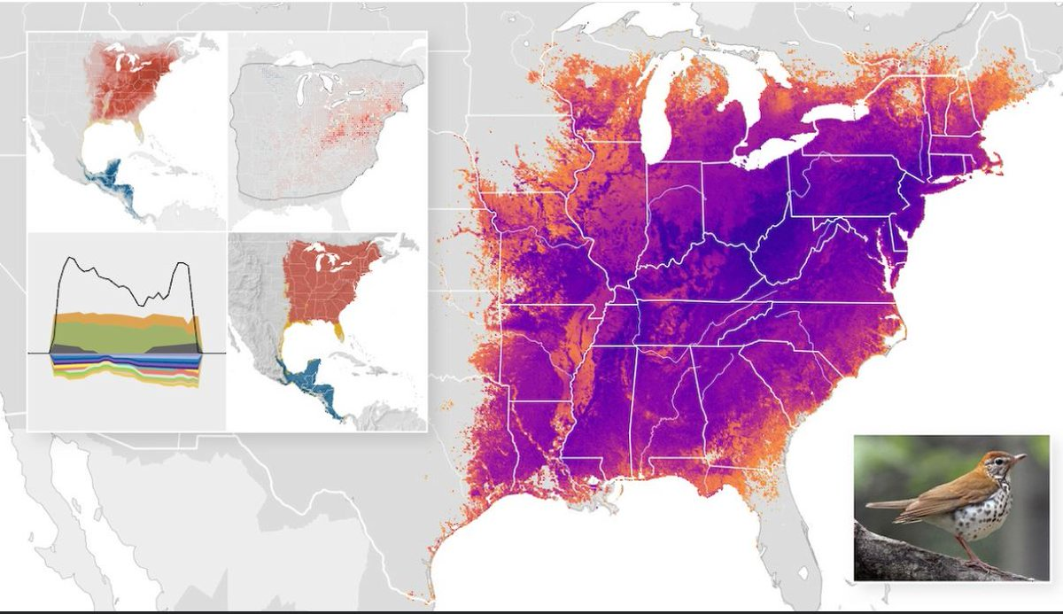 Amazing next generation bird distribution maps now available: ebird.org/science from @Team_eBird by team inc. @tom_auer, @ali__johnston & @StrimasMackey #ornithology