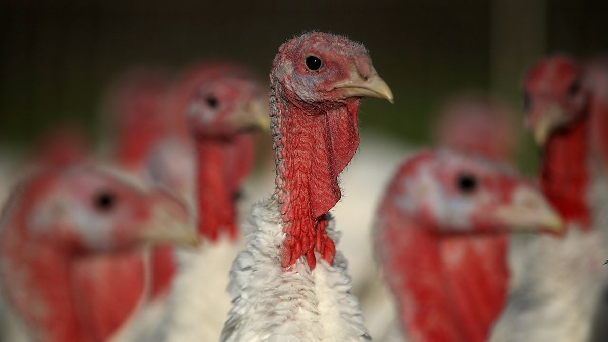 Why a salmonella outbreak shouldn't ruin your Thanksgiving https://t.co/N4IfPcxDbK