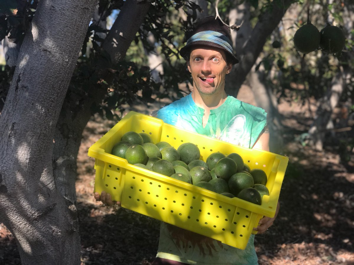 Jason Mraz On Twitter Bring Your Avocado To The Shows This Month And I Ll Sign It Just Kidding I Ll Eat It Avocados And Concert Tickets On Sale Now Mrazfamilyfarms Mrazteam Tickets