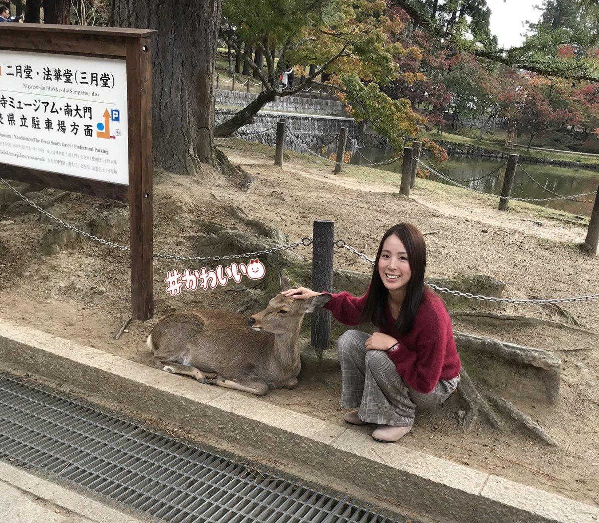 この前奈良行って来たよー\( ˆoˆ )/♡ 紅葉見に行ったのに鹿に必死🦌💨笑 可愛かったぁあ😋✨ 帰りに「大仏プリン🍮」買ったねんけどめっちゃ美味しかった(*^^*)🎶 きっと紅葉の時期もすぐに終わっちゃうんやろなあ😭!