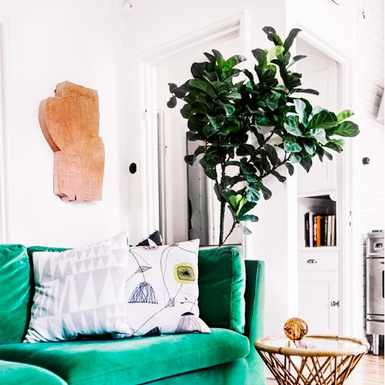 Sometimes, all it takes is an indoor plant to freshen up your living room! https://goo.gl/TrKSfq