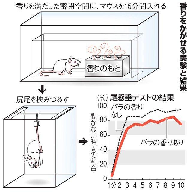 【研究】バラの香りは逆境に効果!耐える力を増強 https://t.co/M4lnMLerXb  川崎医療福祉大などの研究チームがマウス実験で立証。リラックス効果と思われがちだが、逆境に耐える力を増強するという意外な結果になった。